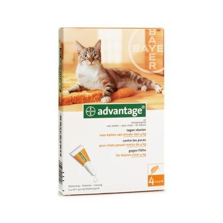 Advantage Kat 40 x4