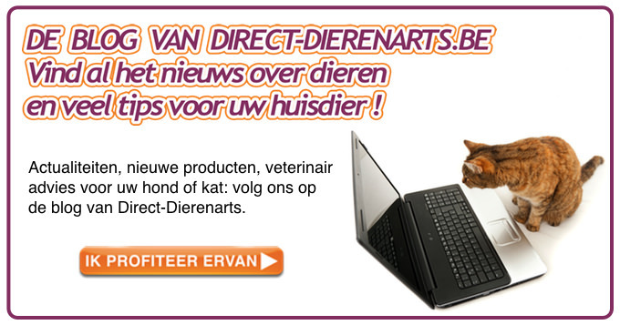 Link naar de blog direct-dierenarts.be